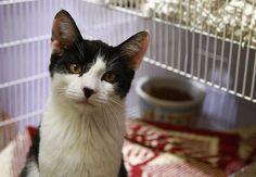 Stop Killing Animals at New York Shelters