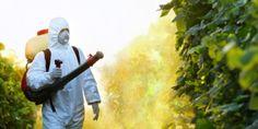 Avaaz - Proíbam o novo super veneno da Monsanto