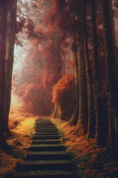 ~~The magical path | autumn in a magical Taiwan forest | by Hanson Mao~~