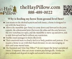 Learn the physical, mental & emotional benefits of allowing your horse to eat in a natural grazing position. Horse Feed, My Horse, Horses, Best And Less, How To Level Ground, Barn, Future, Honey, Future Tense