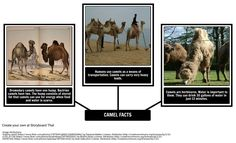 How the Camel Got His Hump: Just So Stories by Rudyard Kipling Photos For Class, Create A Storyboard, Title Boxing, Character Map, If Rudyard Kipling, Pow Wow, Student Engagement, Common Core Standards, Vocabulary Words
