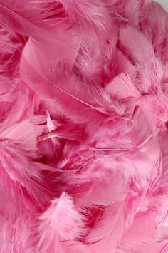 Fondos Rosados - Fushion News