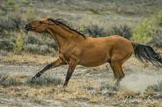 Charging wild horse Andalusian Horse, Friesian Horse, Arabian Horses, All The Pretty Horses, Beautiful Horses, Wilde Mustangs, Draft Horses, White Horses, Horse Girl