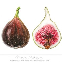 How to paint a velvety, round fig in watercolour - Anna Mason Art Watercolor Fruit, Fruit Painting, Watercolor Paintings, Original Paintings, Watercolour, L'art Du Fruit, Fruit Art, Fruit Cakes, Fig Fruit