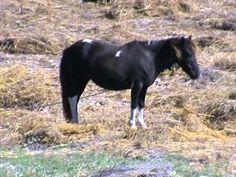 002 Places To Visit, Horses, Animals, Design, Animales, Animaux, Animal, Animais