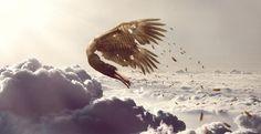 Icarus - te dicht bij de zon / er vallen veertjes