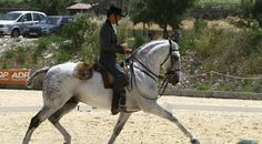 Pedro Torres....Working Equestrian & Dressage