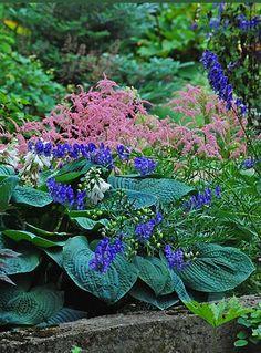Shade plants - Hosta sieboldiana 'Elegans',  Astilbe 'Ostrich Plume'  Aconitum carmichaelii