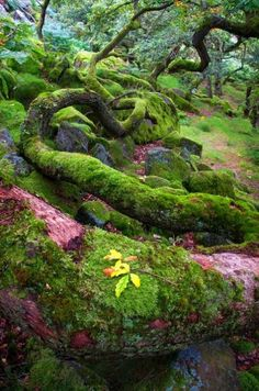 tree, forest, and nature image Foto Nature, All Nature, Amazing Nature, Magical Forest, Tree Forest, Beautiful World, Beautiful Places, Jardin Decor, Belleza Natural