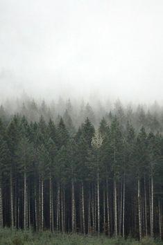 осень, красота, лес, хипстер, горы, деревья