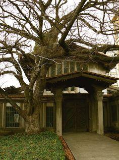 AURORA : Maybeck's Masterpiece in Berkeley, CA