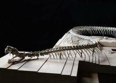 Serpent d'Océan - Huang Yong Ping | Nantes Tourisme