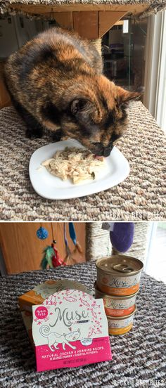 Gabbi approves of Purina Muse® Natural Cat Food! With Muse you don't have to choose between natural nutrition and food that tastes great. Your cat can have both when you choose Muse. Natural has never been so delicious. Put Muse to the test with our clean plate guarantee. #MyCatMyMuse #Ad| beckysbestbites.com