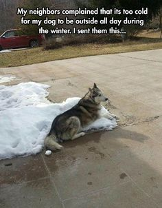 They're winter dogs, people!