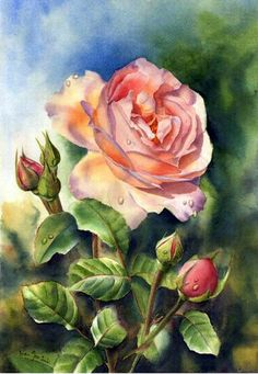 Marney Ward Aquarelle Rose rose