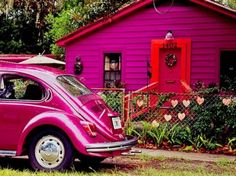 Magenta Beetle and House