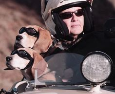 'Easy Rider' Dogs Don Doggles & Ride Shotgun In Motorcycle Sidecars  ... see more at PetsLady.com ... The FUN site for Animal Lovers | via @roncallari