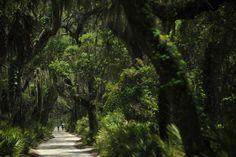 cumberland island ecosystem - Google Search Cumberland Island, Country Roads, Google Search