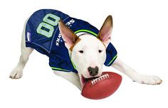 Official NFL Seattle Seahawks Football Jersey for your Dog. They come in  all sizes! 06402755b