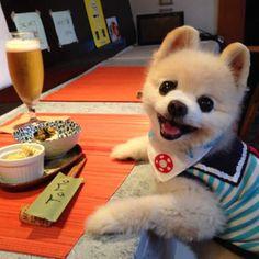 超萌え犬♡ぬいぐるみのようなアイドル犬、俊介くんの胸キュンフォト24選 | まとめ記事 | パシャっとmyペット