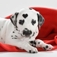 Love the heart spot...polka dots & a heart!