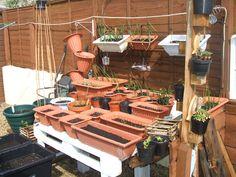 my planter garden