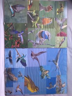 collage over vogels ook een keer gemaakt