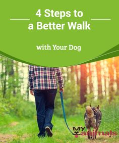 4 Steps to a Better Walk with Your Dog  Going on a walk is one of the most anticipated moments of a dog's day. It is their time for fun and socialization with their friends. If you want to have outstanding quality walks, keep reading because we're going to give you four ways to improve walks with your dog.