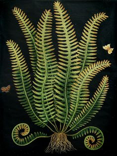 Paul Montgomery Studio: Botanical Fern 2