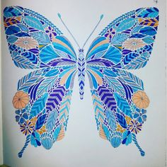 Butterfly , blue butterfly, multicolor , colouring for adults
