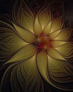 © Poinsettia in Gold / Fractal art by Amanda Moore