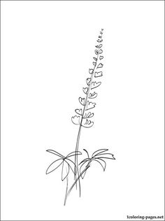 Lupine coloring page for kids | Coloring pages Flower Tattoos, Cute Tattoos, Small Tattoos, Body Art Tattoos, Tatoos, Alaska Tattoo, Lupine Flowers, No Regrets Tattoo, Coloring Pages For Kids