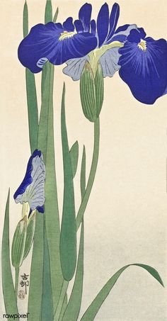 Blue Irises, Ohara Koson, 1900 - colour woodcut, h 254 × w Ohara Koson, Iris Art, Iris Painting, Japanese Flowers, Japanese Painting, Japanese Prints, Japan Art, Gravure, Botanical Illustration