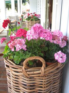 geraniums in a basket - Garden Plants Container Flowers, Container Plants, Container Gardening, Vegetable Gardening, Succulent Containers, Beautiful Gardens, Beautiful Flowers, Colorful Flowers, Pink Flowers