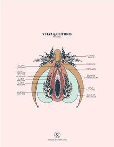 Pelvis Anatomy, Lung Anatomy, Heart Anatomy, Brain Anatomy, Anatomy Art, Fetus In Womb, Duvet Day, Uterine Prolapse, Feminist Art
