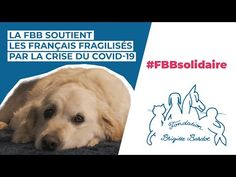 La Fondation Brigitte Bardot soutient les millions de français fragilisés par le COVID-19 - YouTube Fondation Brigitte Bardot, France, Youtube, Youtubers, Youtube Movies, French