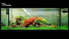 How a simple planted tank of 200x80x90cm for testing plants can turn in something beautiful. #Aquaflora #Aquascaping #planted #aquarium #aquatic #plant #freshwater #plantedtank #aquascape #plantedaquarium #FAAO