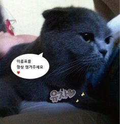 www.primepet.co.kr
