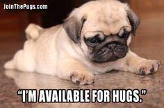 Pug Hugs All Around - Join the Pugs