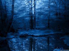 La magie de la forêt » forêt bleue enneigée