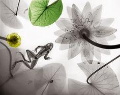 Raio-X da Natureza • Jardim de Siguta •