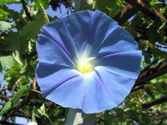 gülçin ağsar mavi çiçek perdeye benziyor
