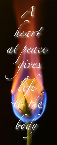 Proverbs 14:30 I have great peace because of God's promises, and he en camps me with friends IN HIM. AMEN.