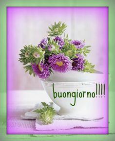 buongiorno!!!!!