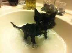But.....I believed you... http://ift.tt/2b4DNdC via /r/cats http://ift.tt/2bnlJwv cats funny pictures