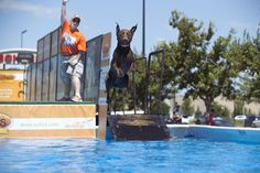 Scheels to host DockDogs Jumping Competition as part of hunting expo | Grand Forks Herald