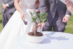 Tree 'planting' ceremony