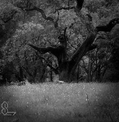 Oak Tree Black and White Photography Print