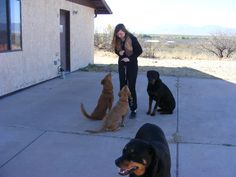 The 3D's of Dog Training: Distance, Duration and Distractions