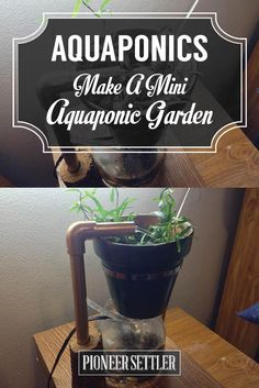 Make A Mini Aquaponic System - Hydroponics | Self-sufficiency Gardening Ideas by Pioneer Settler http://pioneersettler.com/mini-aquaponic-system/